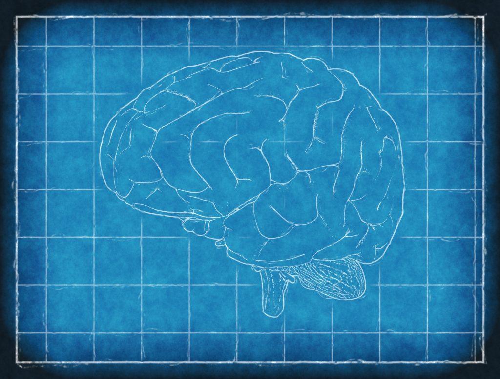Gehirn | Leptin Hormon