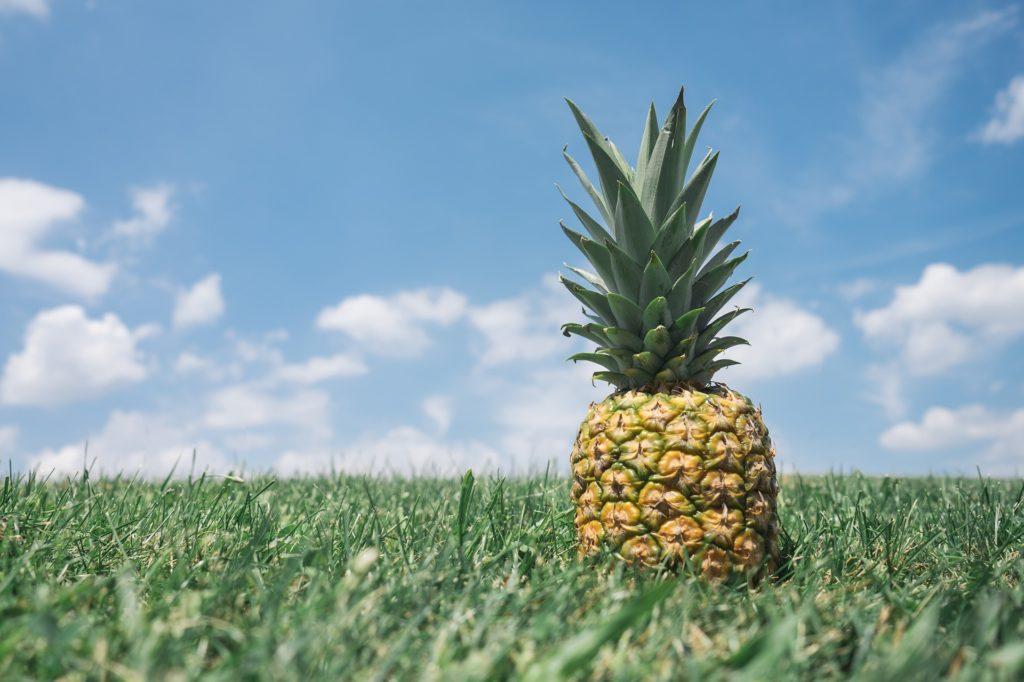 Ananas im Rasen | Ananas Diät